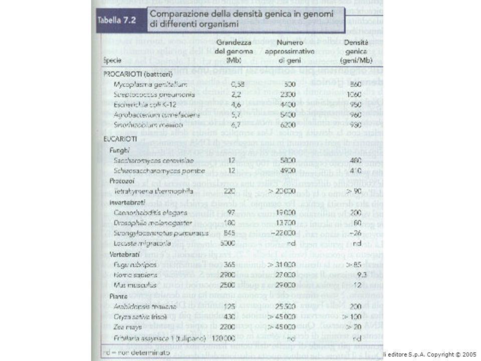 La grandezza del genoma è correlata alla complessità dell'organismo