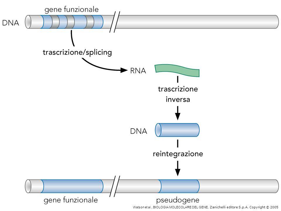 Formazione degli pseudogeni