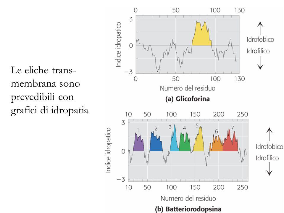 Le eliche trans-membrana sono prevedibili con grafici di idropatia