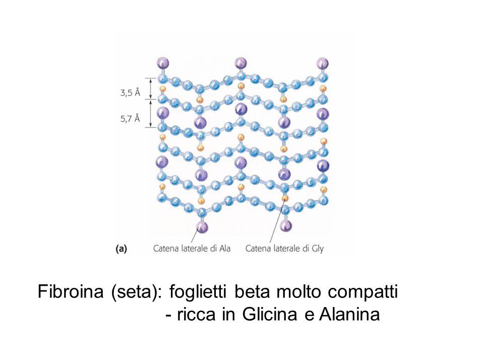 Fibroina (seta): foglietti beta molto compatti