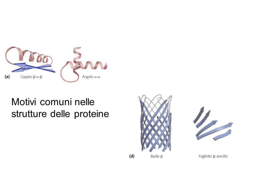 Motivi comuni nelle strutture delle proteine