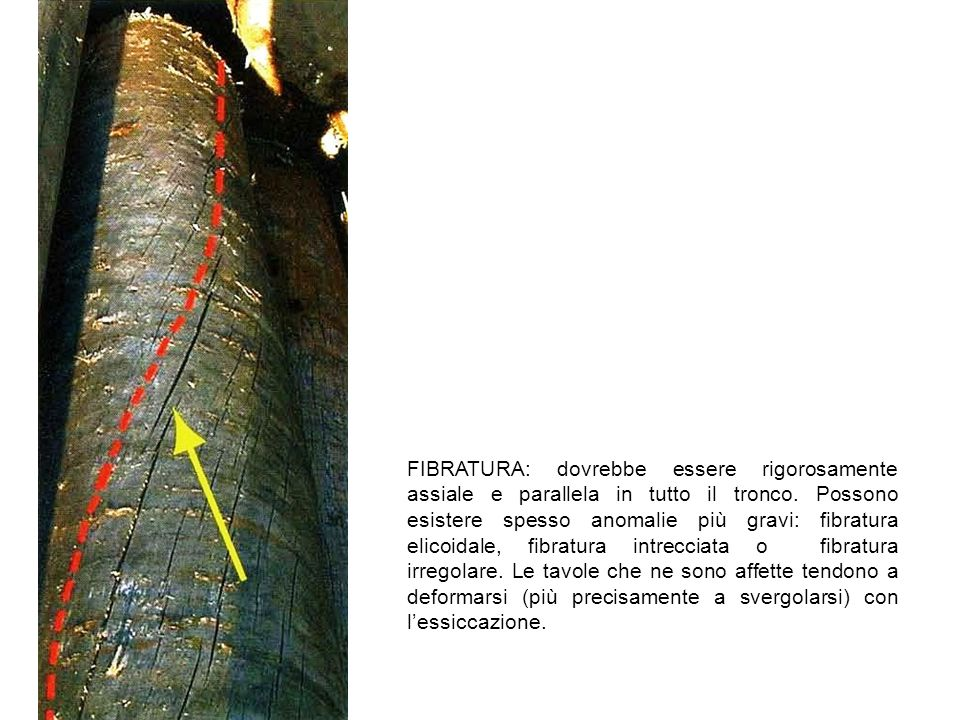 FIBRATURA: dovrebbe essere rigorosamente assiale e parallela in tutto il tronco.
