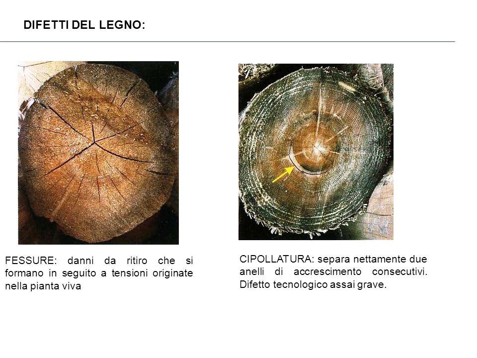 DIFETTI DEL LEGNO: FESSURE: danni da ritiro che si formano in seguito a tensioni originate nella pianta viva.