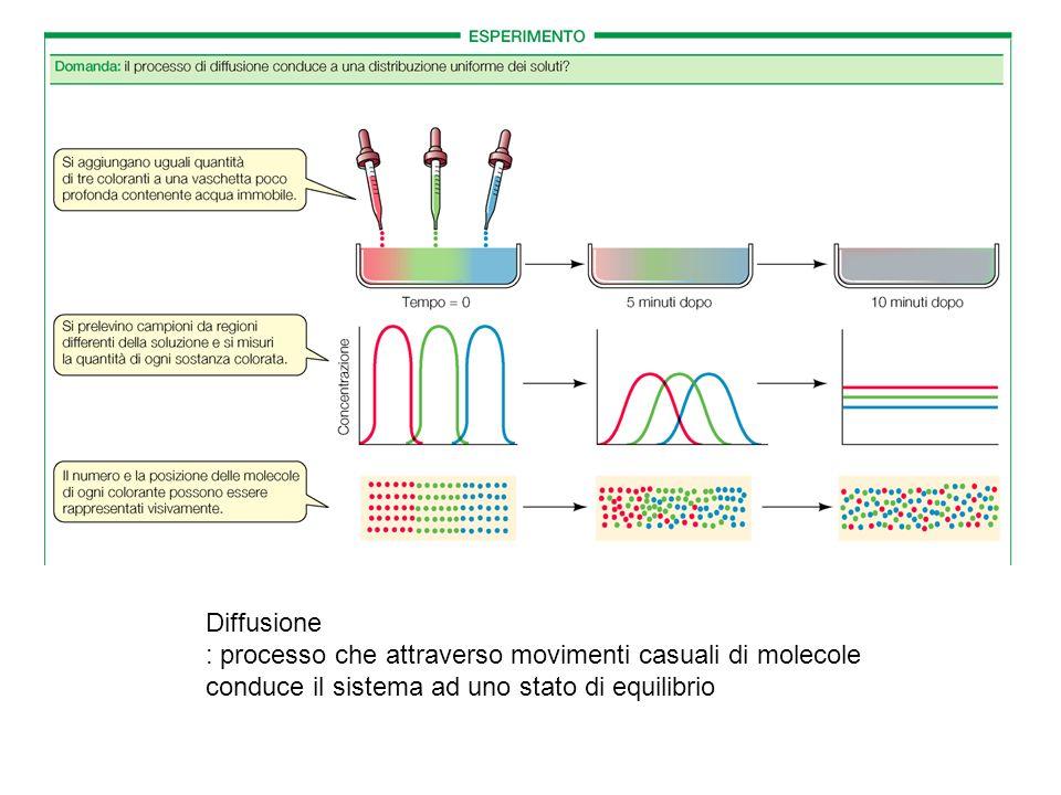 Diffusione : processo che attraverso movimenti casuali di molecole conduce il sistema ad uno stato di equilibrio.