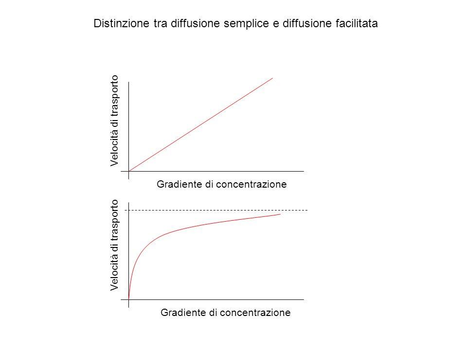 Distinzione tra diffusione semplice e diffusione facilitata