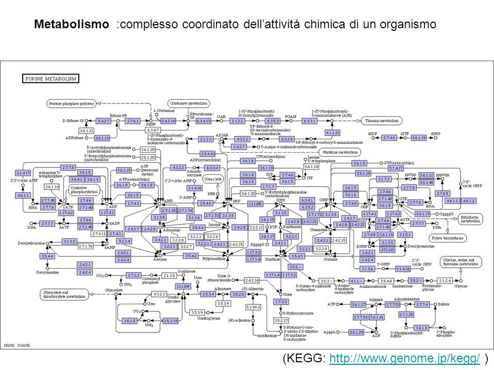 Metabolismo :complesso coordinato dell'attività chimica di un organismo