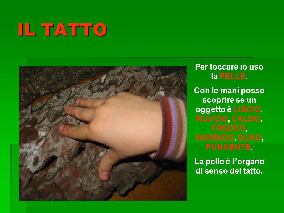 Per toccare io uso la PELLE. La pelle è l'organo di senso del tatto.