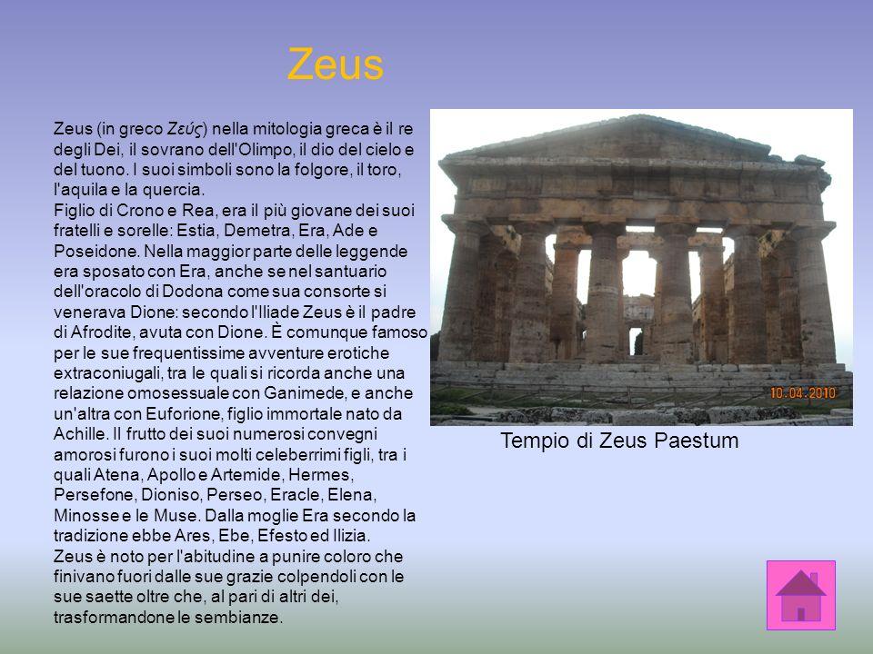 Zeus Tempio di Zeus Paestum