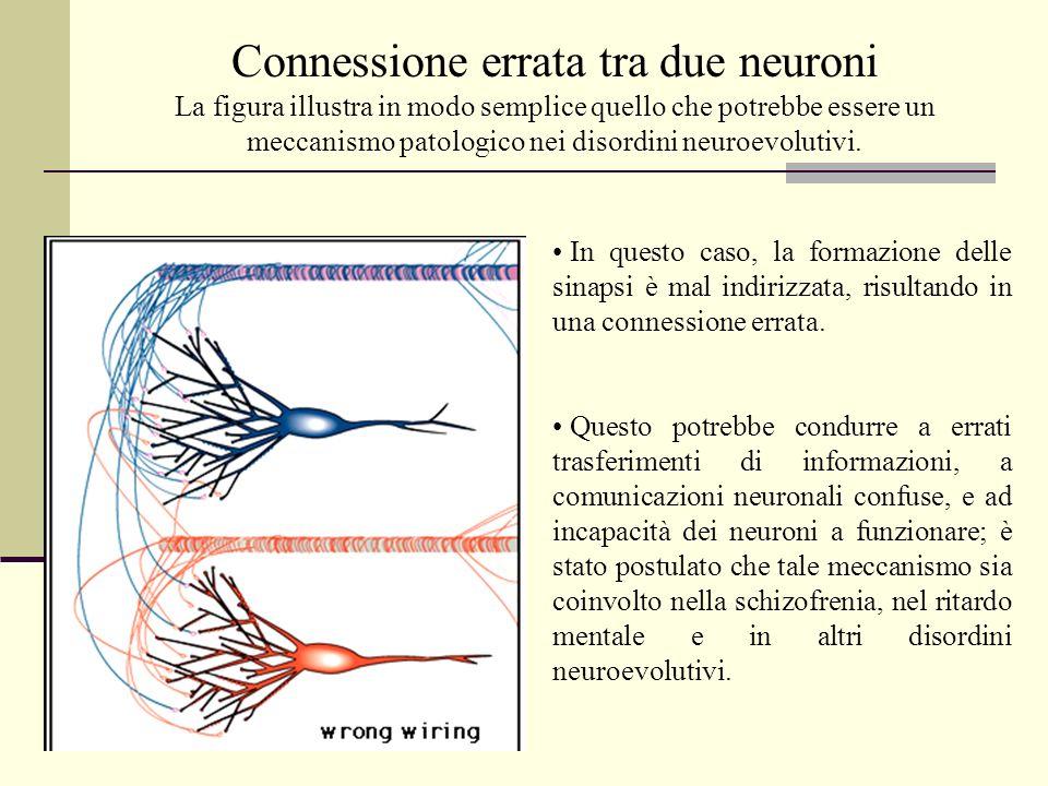 Connessione errata tra due neuroni