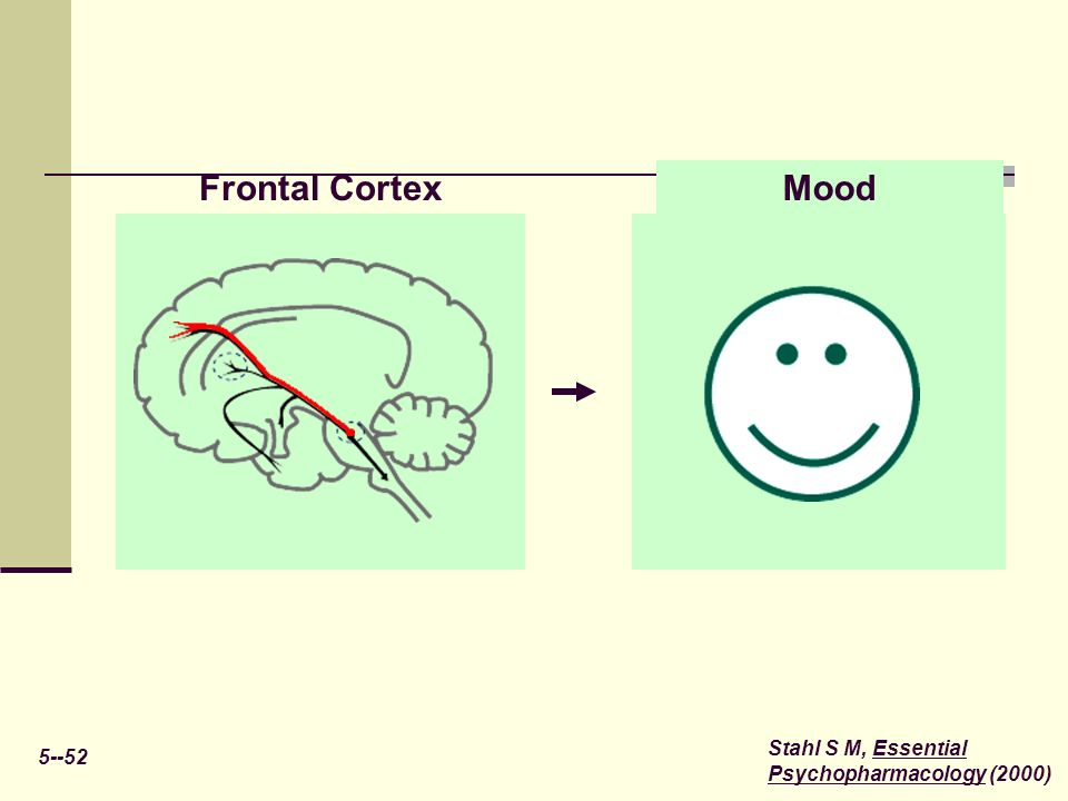 Frontal Cortex Mood Stahl S M, Essential Psychopharmacology (2000)