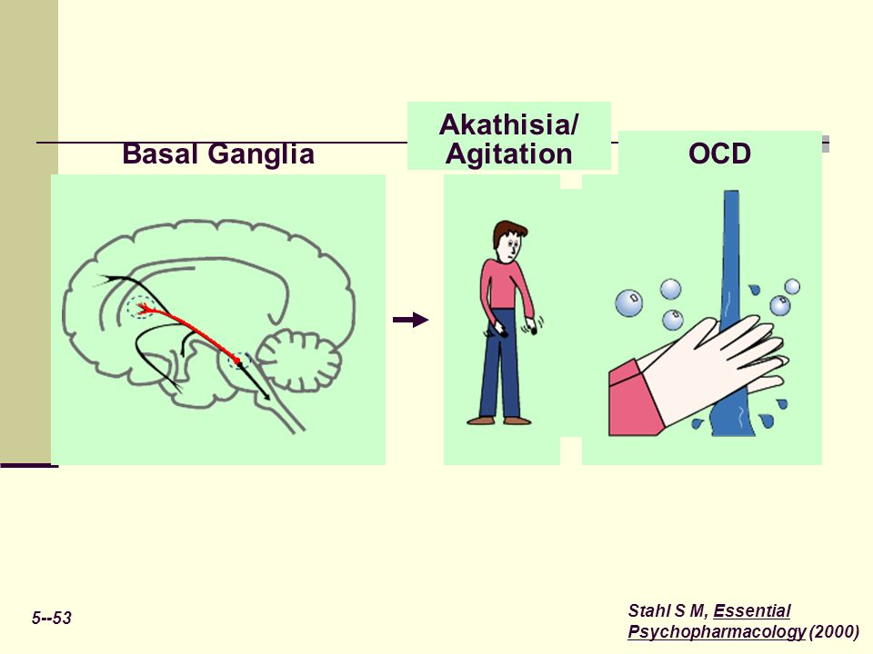 OCD Akathisia/ Agitation Basal Ganglia