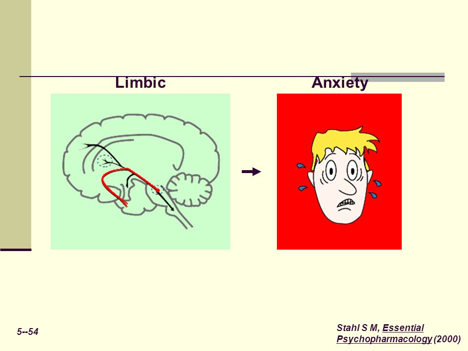 Limbic Anxiety 5--54 Stahl S M, Essential Psychopharmacology (2000)