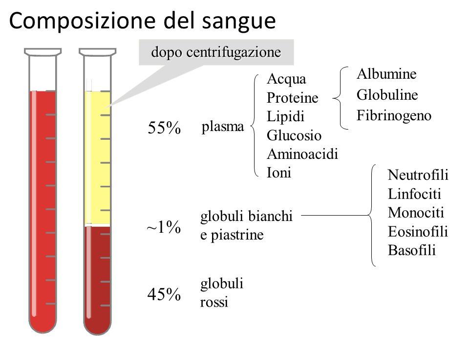 Sangue tessuto connettivo a carattere fluido racchiuso in for Composizione del parlamento italiano oggi