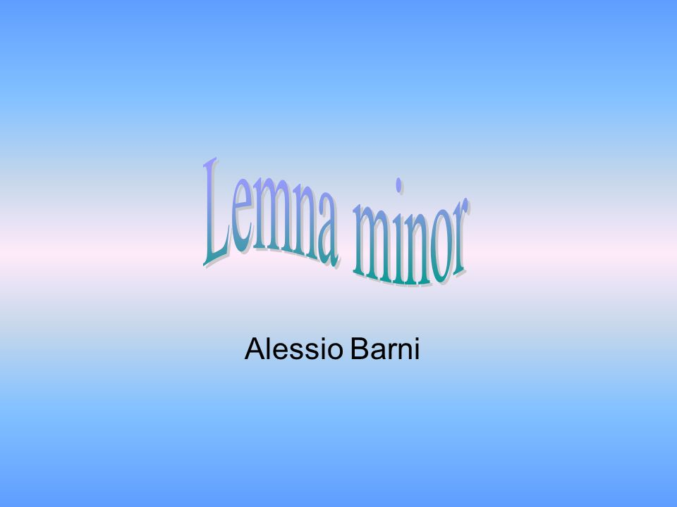 Lemna minor Alessio Barni