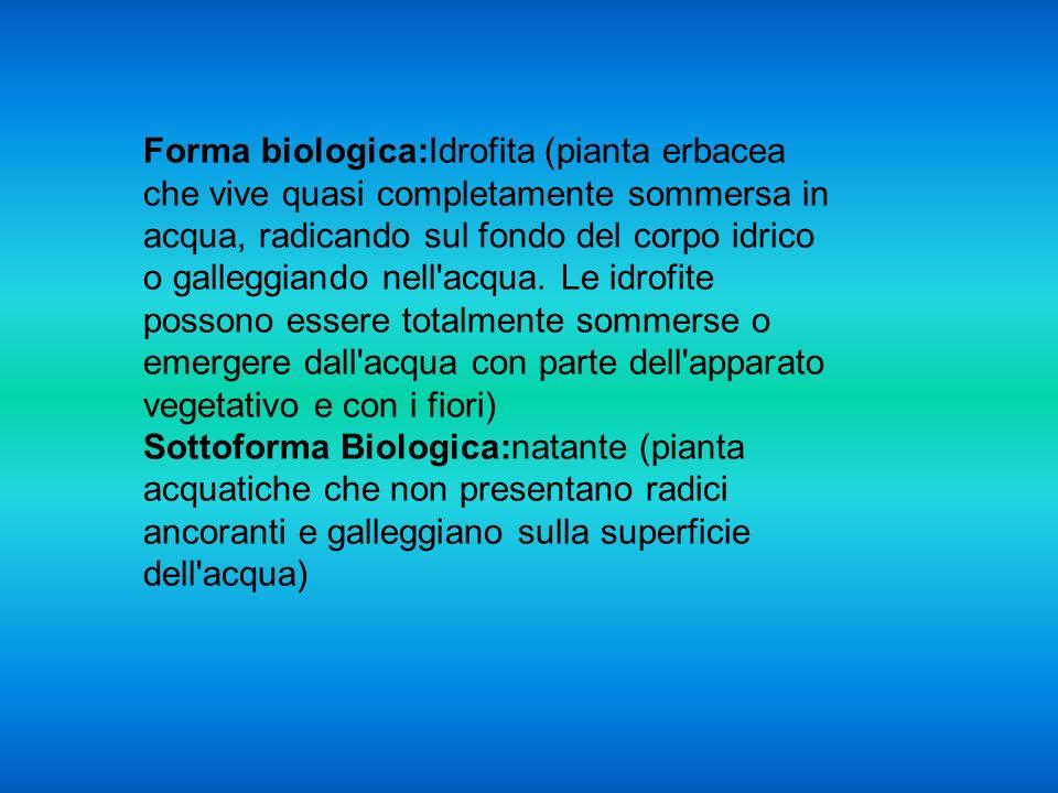 Forma biologica:Idrofita (pianta erbacea che vive quasi completamente sommersa in acqua, radicando sul fondo del corpo idrico o galleggiando nell acqua.