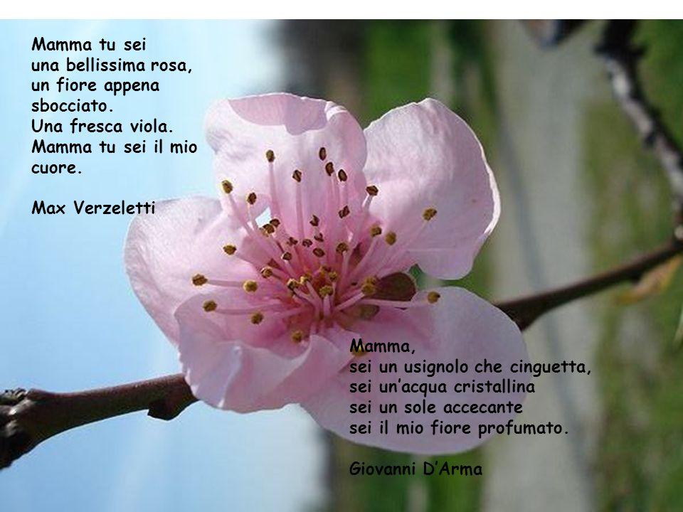 Mamma tu sei una bellissima rosa, un fiore appena. sbocciato. Una fresca viola. Mamma tu sei il mio.