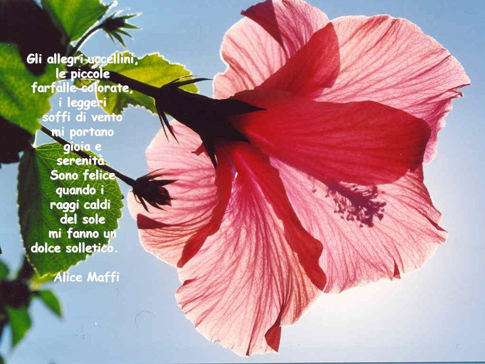 Gli allegri uccellini, le piccole. farfalle colorate, i leggeri. soffi di vento. mi portano. gioia e.