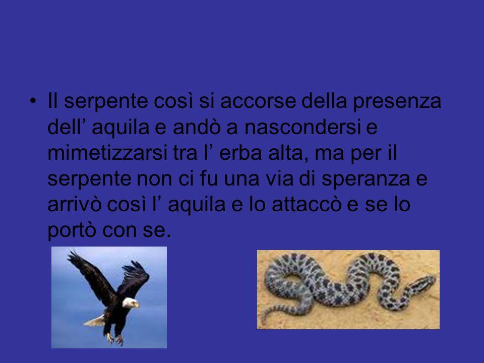 Il serpente così si accorse della presenza dell' aquila e andò a nascondersi e mimetizzarsi tra l' erba alta, ma per il serpente non ci fu una via di speranza e arrivò così l' aquila e lo attaccò e se lo portò con se.