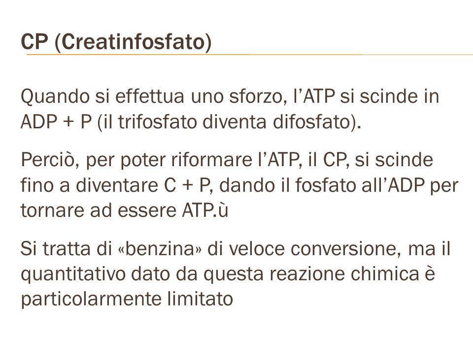 CP (Creatinfosfato) Quando si effettua uno sforzo, l'ATP si scinde in ADP + P (il trifosfato diventa difosfato).