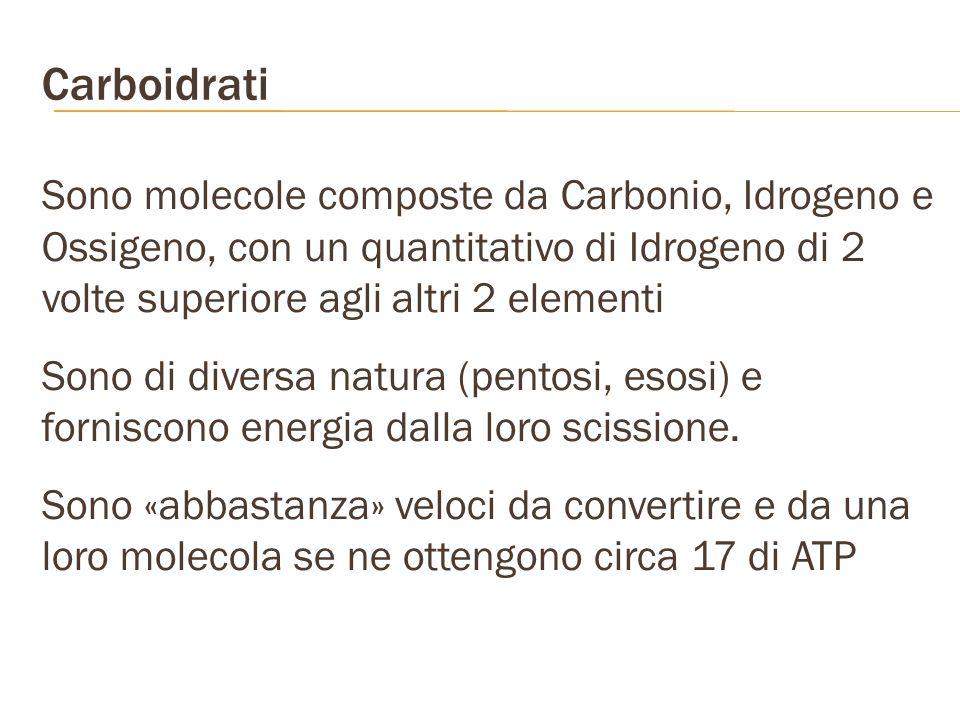 Carboidrati Sono molecole composte da Carbonio, Idrogeno e Ossigeno, con un quantitativo di Idrogeno di 2 volte superiore agli altri 2 elementi.