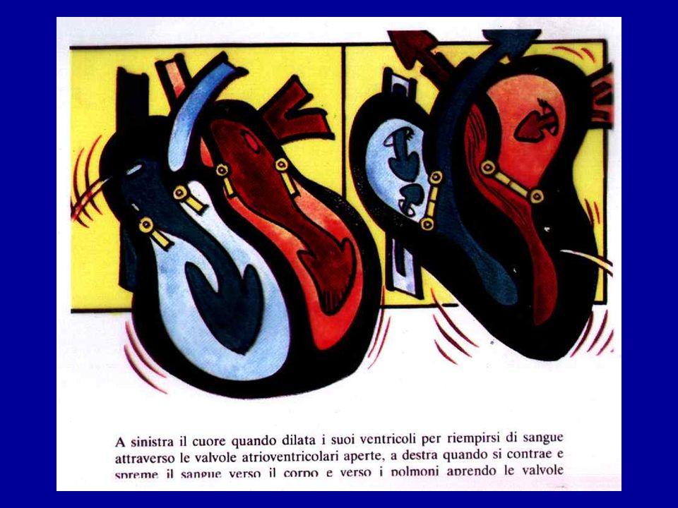Nell'immagine vengono semplificate le due fasi principali del ciclo cardiaco che sono la diastole o fase di rilasciamento e riempimento ventricolare e la sistole o fase di contrazione e svuotamento dei ventricoli.