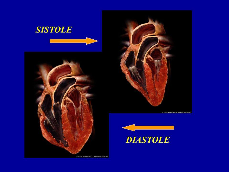 SISTOLE DIASTOLE