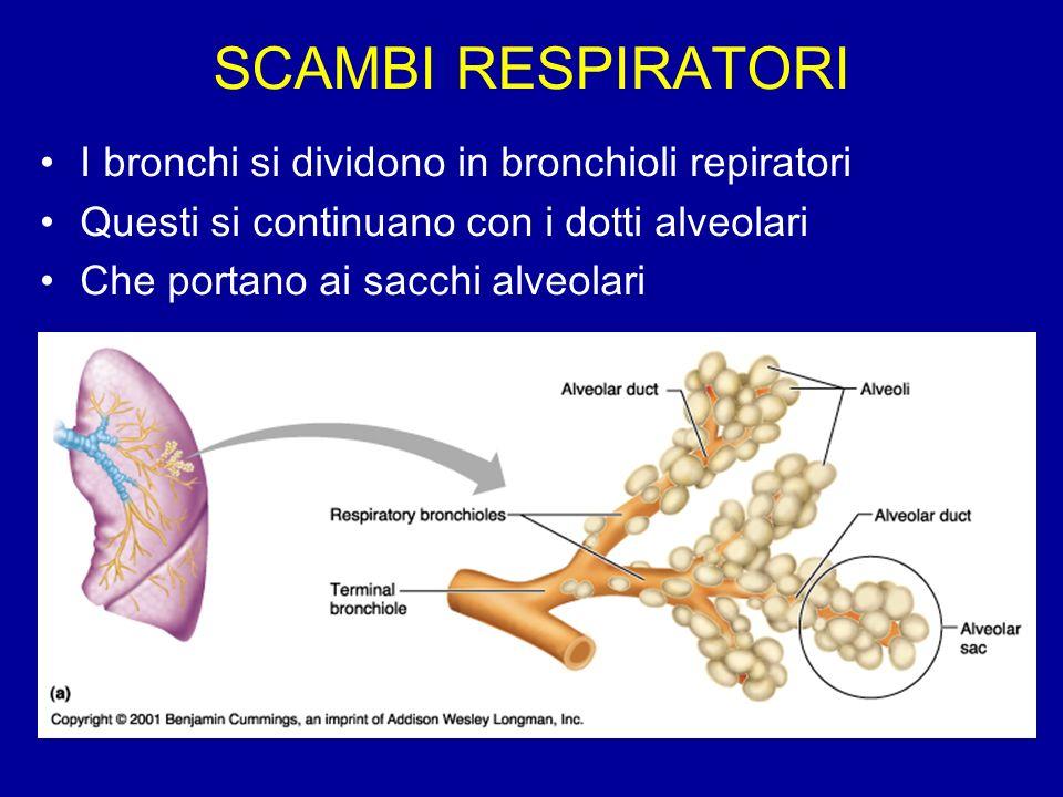 SCAMBI RESPIRATORI I bronchi si dividono in bronchioli repiratori