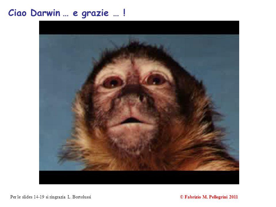 Ciao Darwin … e grazie … . Per le slides 14-19 si ringrazia L.