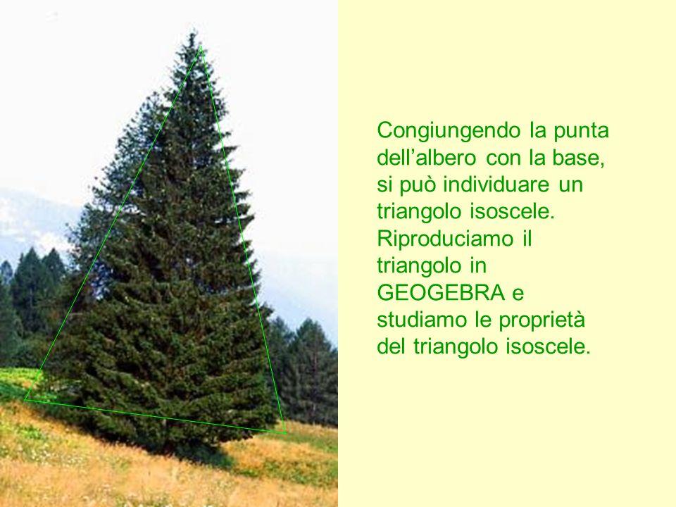 Congiungendo la punta dell'albero con la base, si può individuare un triangolo isoscele.