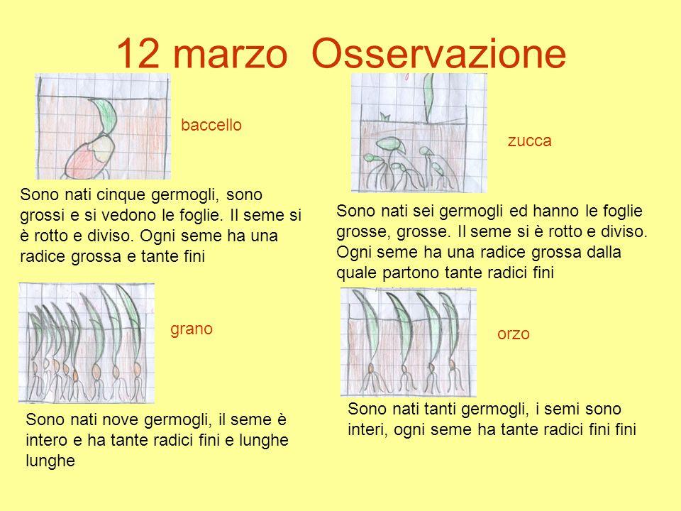 12 marzo Osservazione baccello zucca