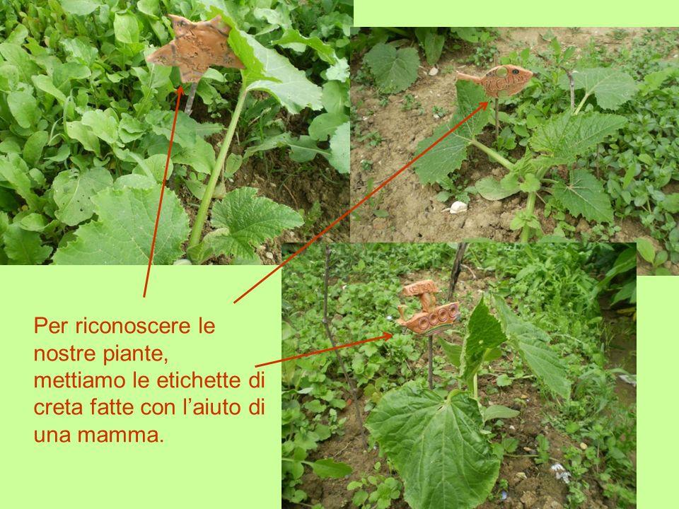 Per riconoscere le nostre piante, mettiamo le etichette di creta fatte con l'aiuto di una mamma.