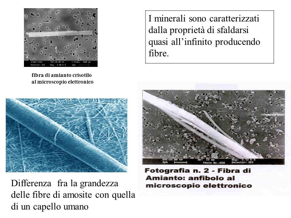 fibra di amianto crisotilo al microscopio elettronico