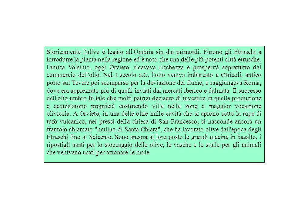 Storicamente l ulivo è legato all Umbria sin dai primordi