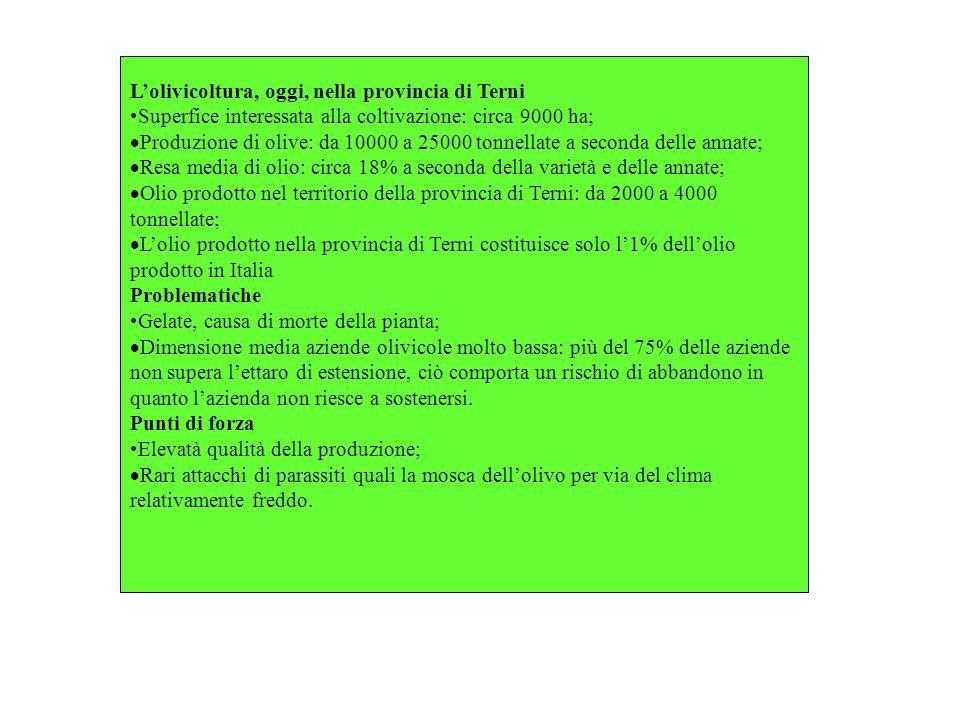 L'olivicoltura, oggi, nella provincia di Terni
