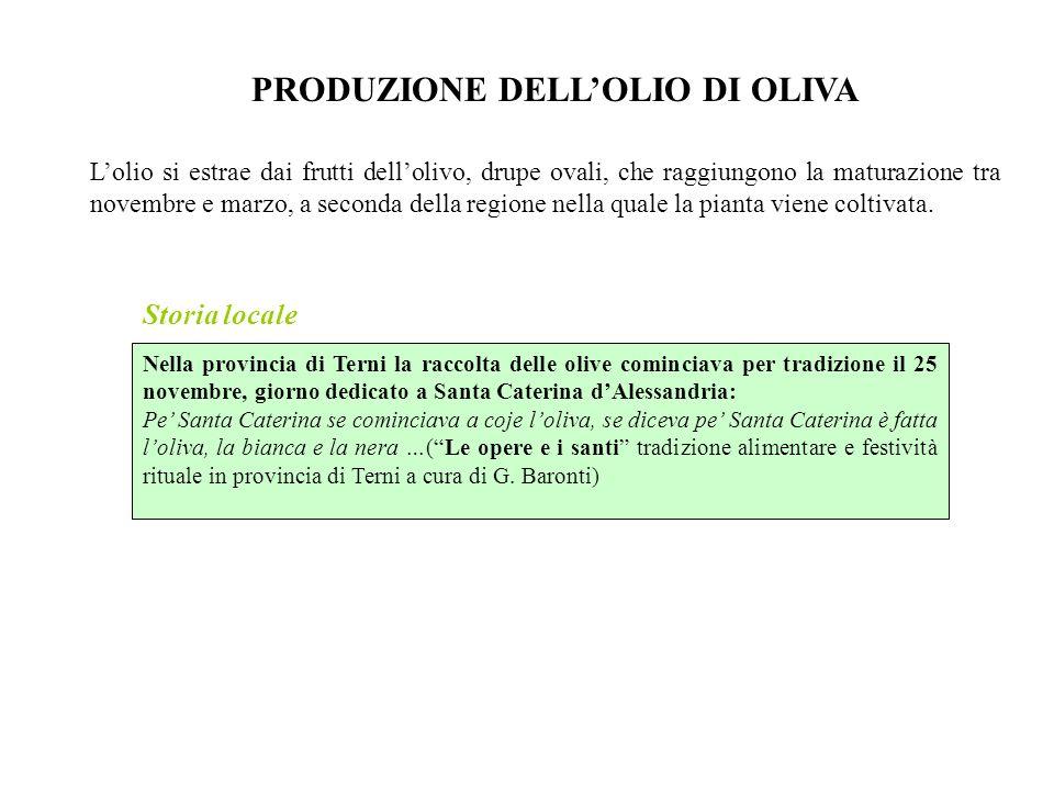 Storia locale PRODUZIONE DELL'OLIO DI OLIVA