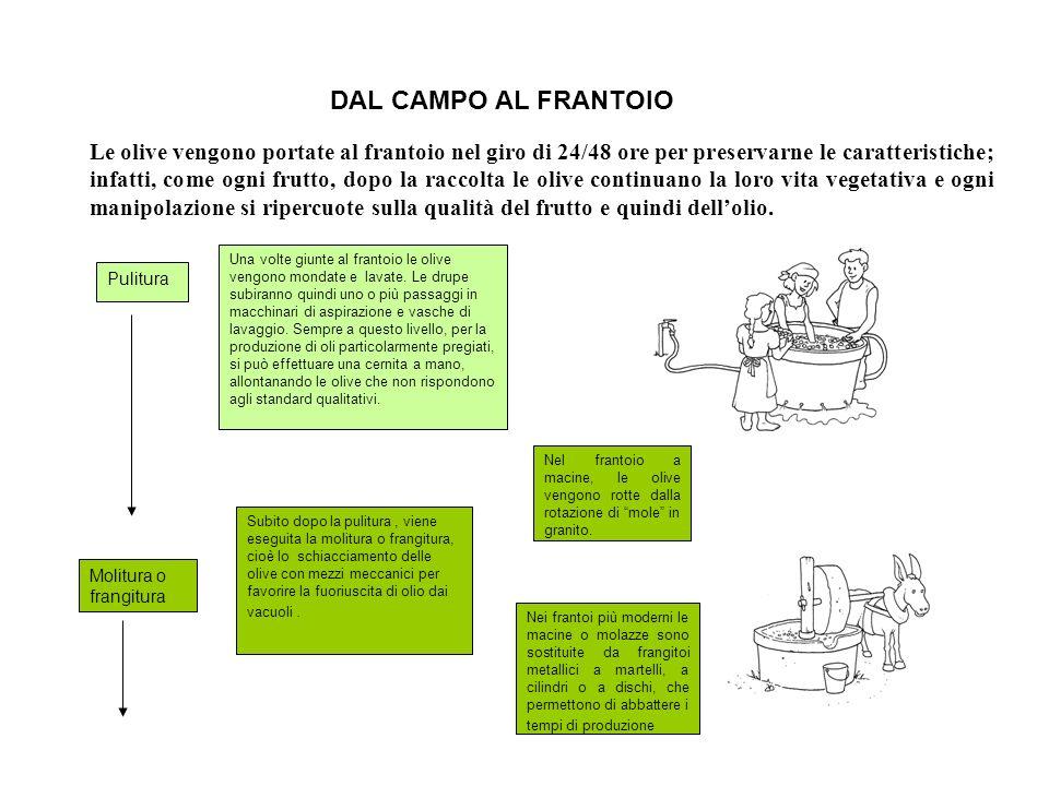 DAL CAMPO AL FRANTOIO