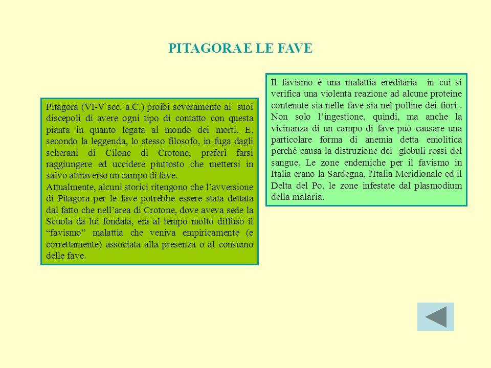 PITAGORA E LE FAVE