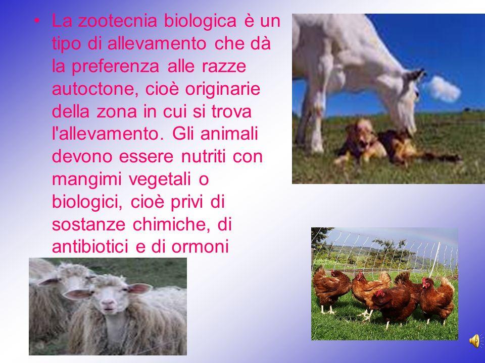 La zootecnia biologica è un tipo di allevamento che dà la preferenza alle razze autoctone, cioè originarie della zona in cui si trova l allevamento.