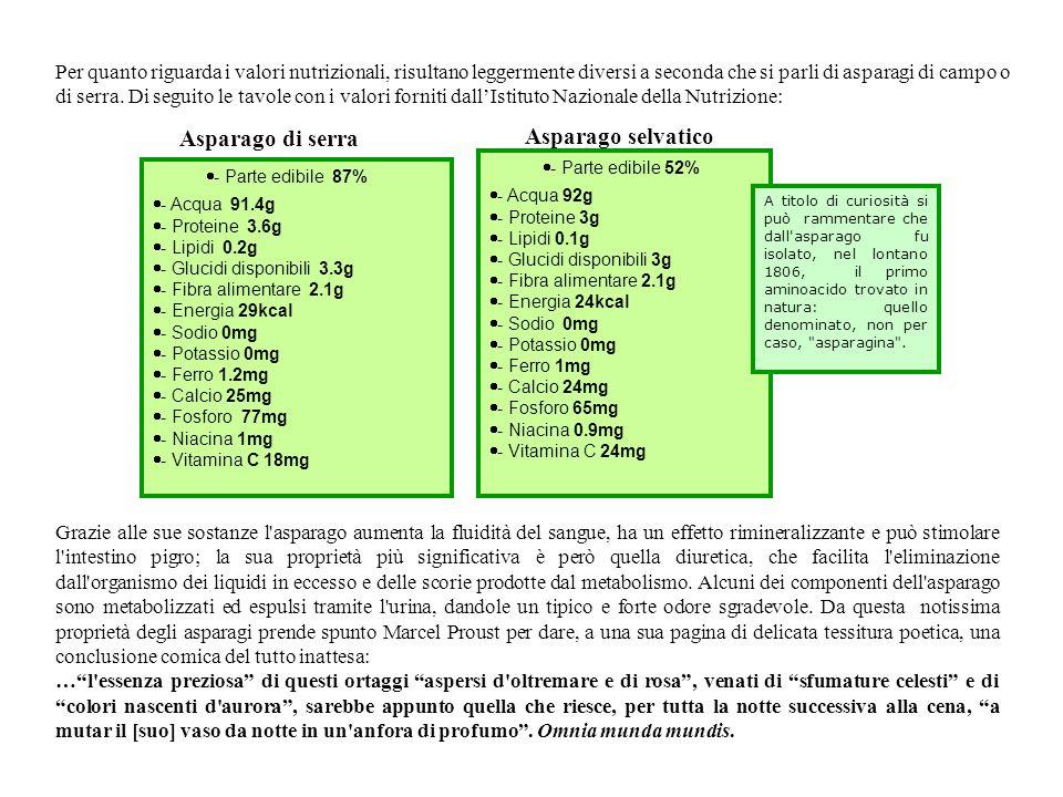 Asparago di serra Asparago selvatico