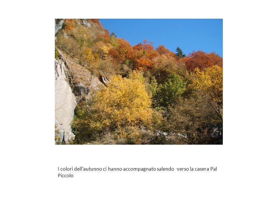 I colori dell'autunno ci hanno accompagnato salendo verso la casera Pal Piccolo