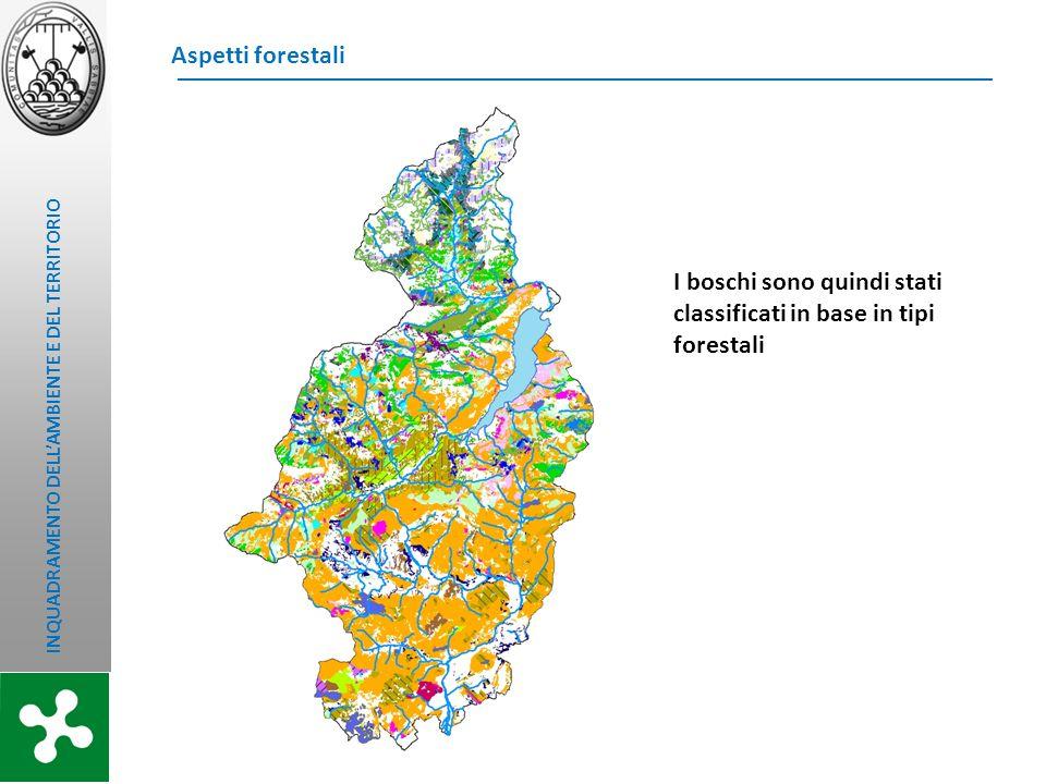 I boschi sono quindi stati classificati in base in tipi forestali