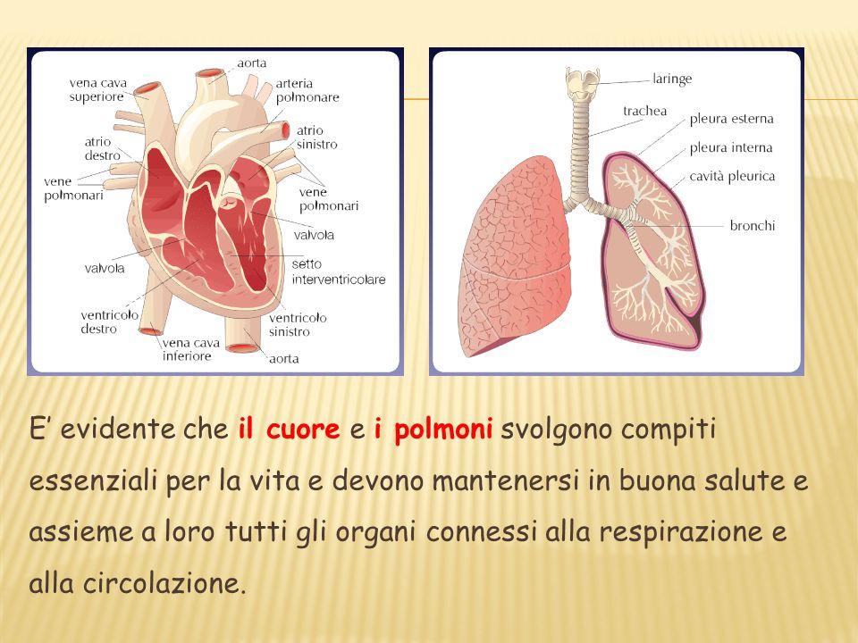 E' evidente che il cuore e i polmoni svolgono compiti essenziali per la vita e devono mantenersi in buona salute e assieme a loro tutti gli organi connessi alla respirazione e alla circolazione.