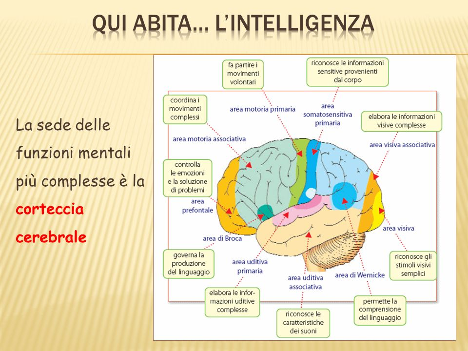 Qui abita... L'intelligenza