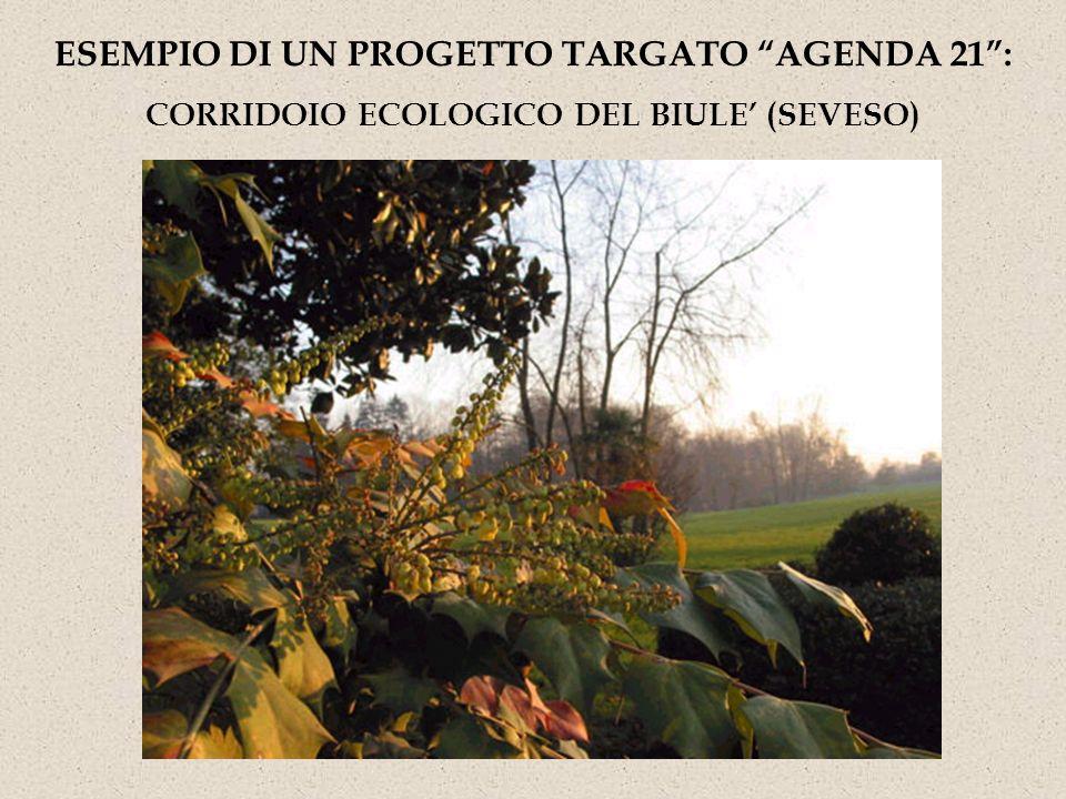 ESEMPIO DI UN PROGETTO TARGATO AGENDA 21 :