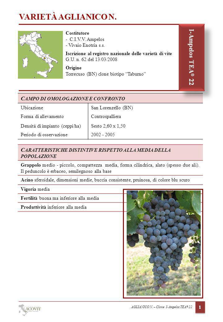 VARIETÀ AGLIANICO N. I-Ampelos TEA® 22