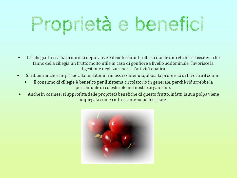 La ciliegia fresca ha proprietà depurative e disintossicanti, oltre a quelle diuretiche e lassative che fanno della ciliegia un frutto molto utile in caso di gonfiore a livello addominale. Favorisce la digestione degli zuccheri e l attività epatica.