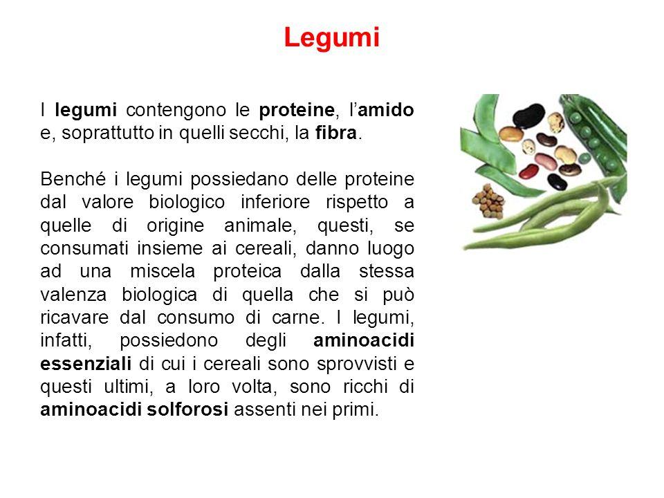 Legumi I legumi contengono le proteine, l'amido e, soprattutto in quelli secchi, la fibra.