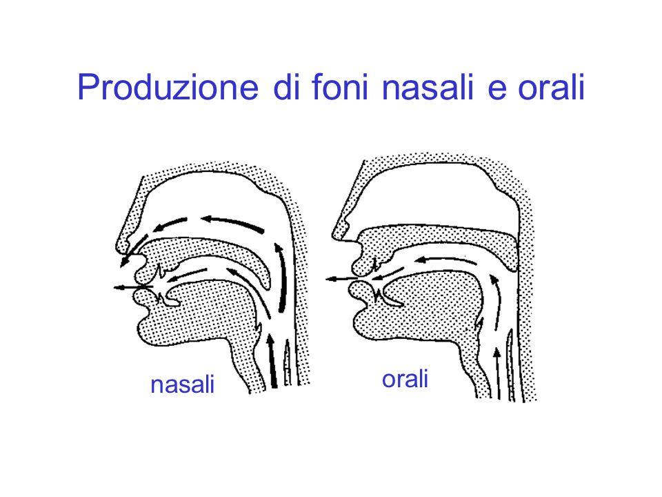 Produzione di foni nasali e orali