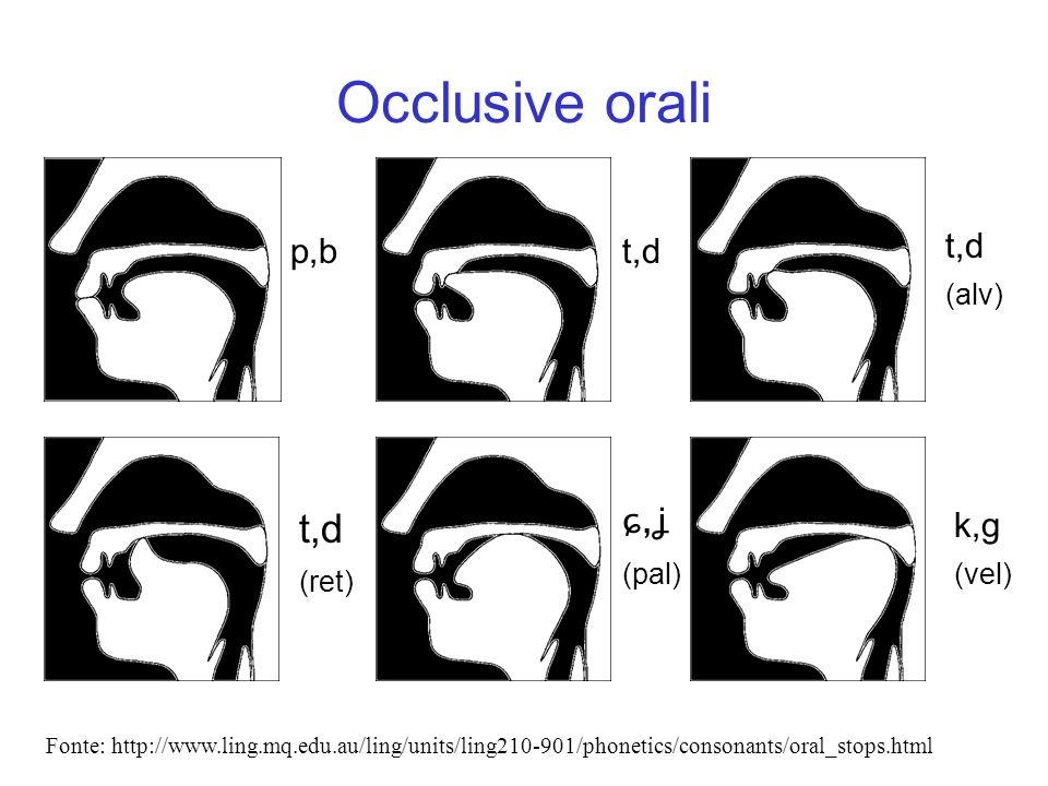 Occlusive orali t,d p,b t,d t,d ɕ,ʝ k,g (alv) (ret) (pal) (vel)