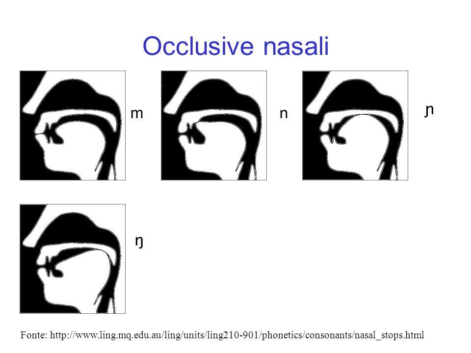 Occlusive nasali m. n. ɲ. ŋ.